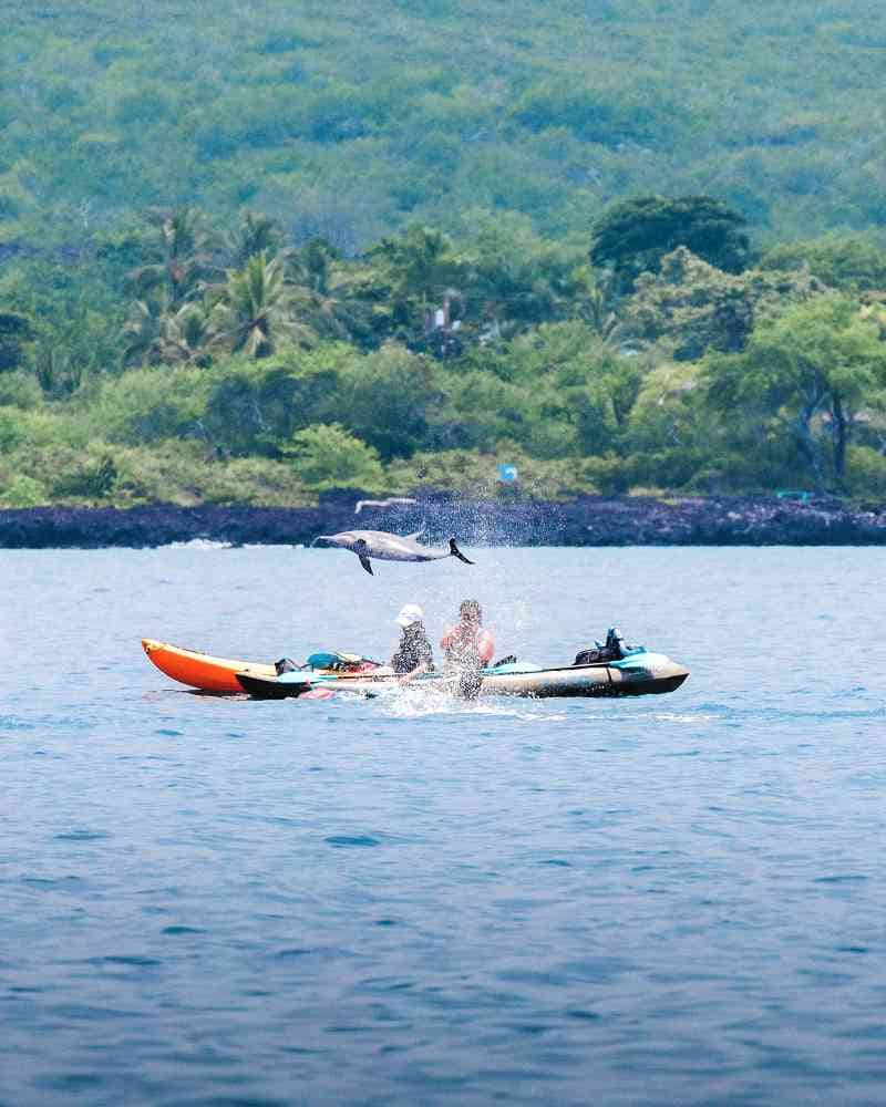 spinner dolphins playing near a kayaker in Kealakekua Bay